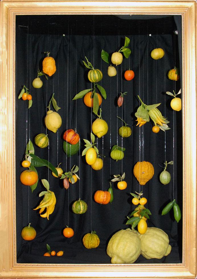 Zitrusfrüchte hängen an durchsichtigen Fäden in einem Bilderrahmen