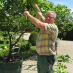 Heimo Karner erklärt den Schnitt von Zitrusbäumen